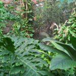 Pure Wildnis im Schmetterlings/Reptilienbereich