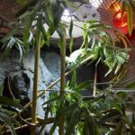 Chamäleon auf dem Ast in Grün