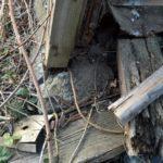 Betonfundament einer Hütte