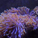 Koralle im Unterwasserbereich