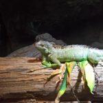 Reptilie auf einem Baumstamm